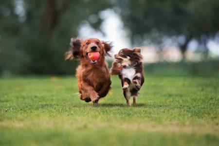 Dog Veterinarian